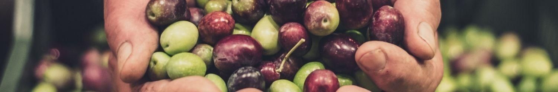 Olives entières
