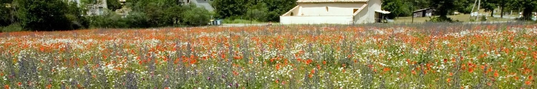 Aromates de Provence