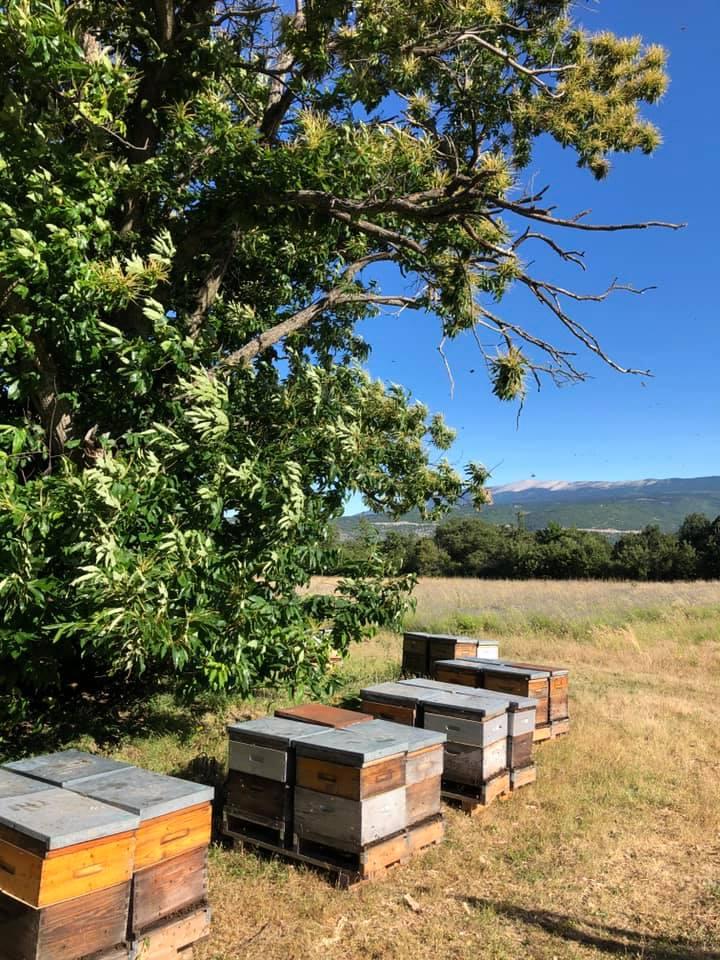 ruches miels de Provence